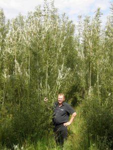 Lenhard Fleßner te Ihlowerfeh teelt al jaren wilgen en levert onder meer aan de biocentrale in Emden.