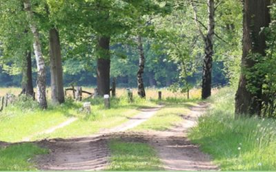 Verslag webinar 8 juli: PBL & WUR over houtige biomassa