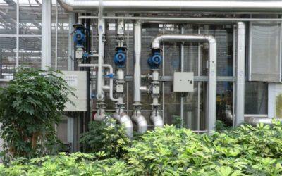 Biowkk in de glastuinbouw – Zevenhuizen